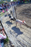pig races (1 of 1)