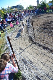 pig races 3 (1 of 1)