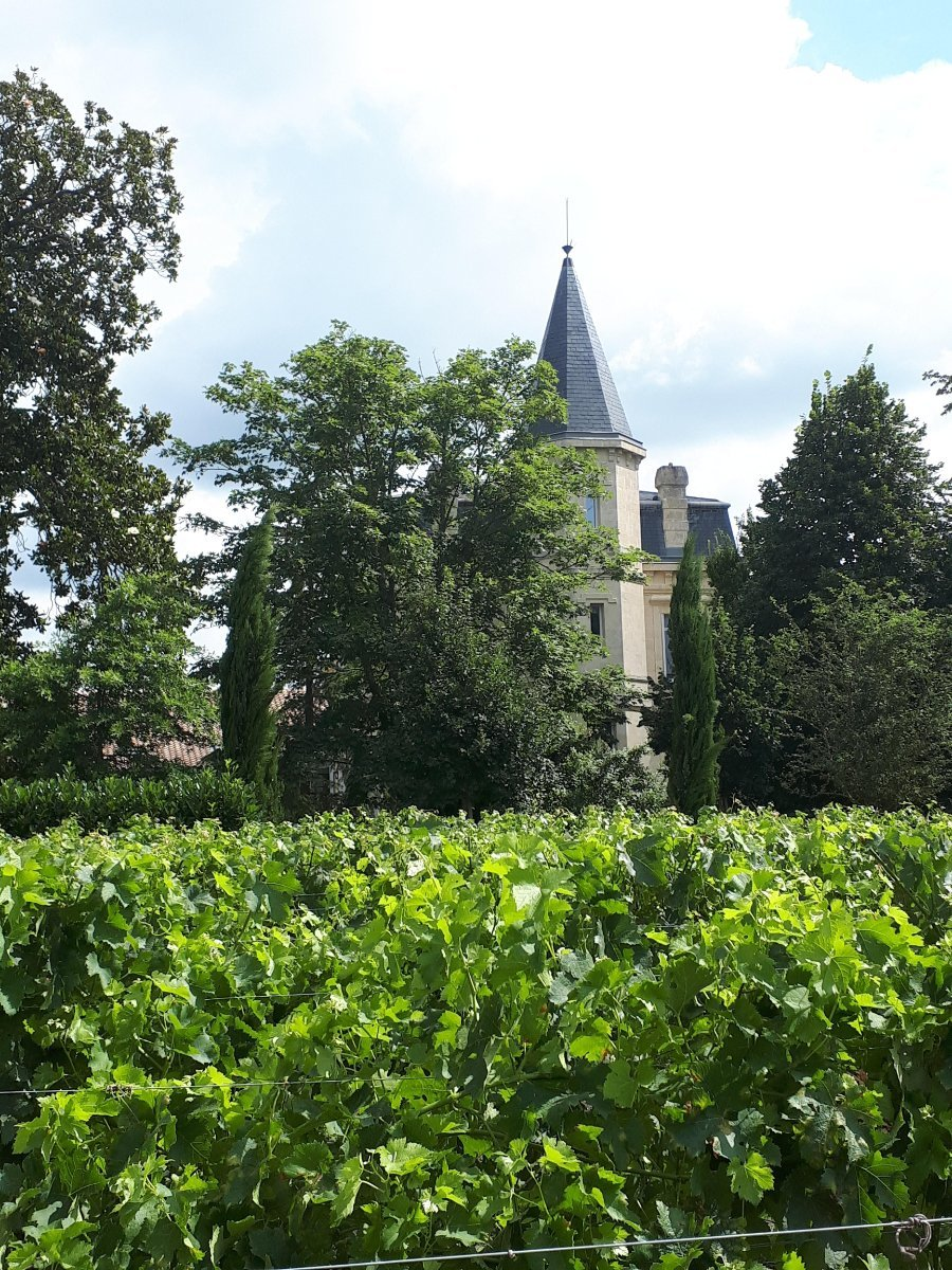 How to find a wine job in Bordeaux • Charlie Geoghegan