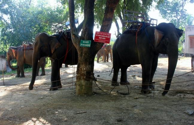 vietnam ride elephant vietnam