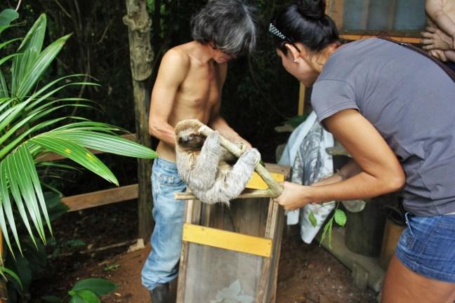 Baby sloth being saved at Tipi Jungla