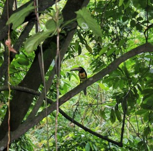 Toucan at Samasati - Charlie on Travel