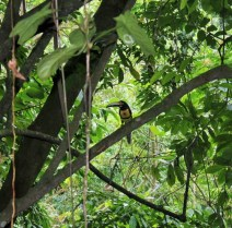 Toucan we saw on a nature walk here