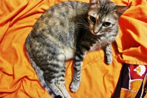 Queenie the cat house sitting Ometepe Island Nicaragua - Charlie on Travel