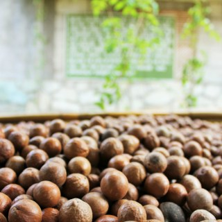 Macademia nuts drying out