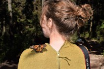 Charlie on Travel with Butterfly on shoulder