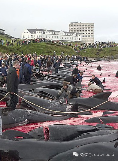dolphin killers1