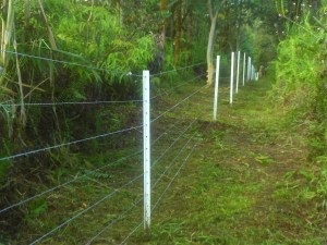 Demonstration high tensile electric fence in Mt. View