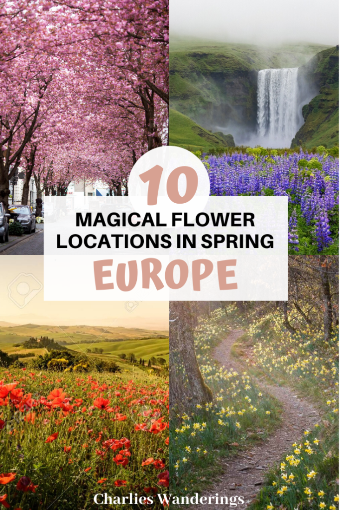 10 Unique Flower Locations in Europe in Spring