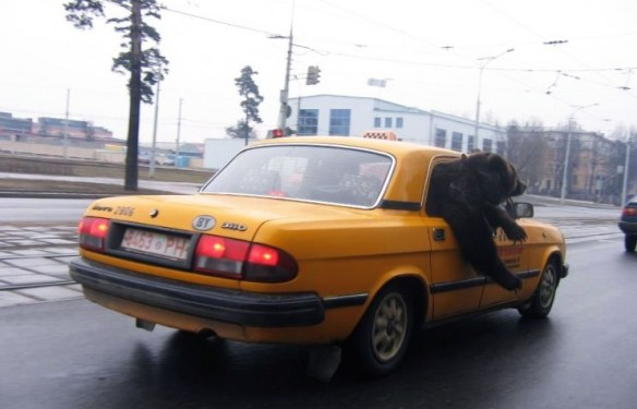 Podobno taksówka jest z białoruska, ale kto by się tym przejmował.
