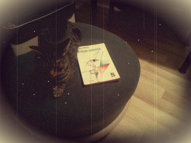 A tutaj druga kotka z książką. Misty jest prawdziwą samotniczką:)