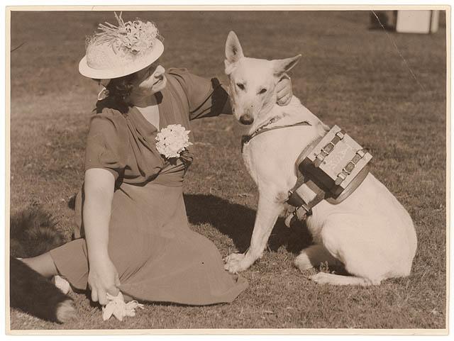 Piesek z plecaczkiem. 1939 Źródło: https://flic.kr/p/5TMG2h