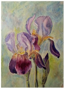 Glendale Irises