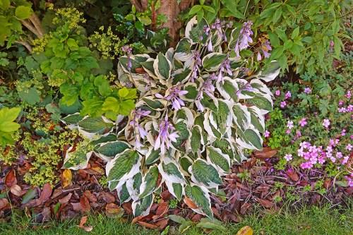 In-The-Garden-06.jpg