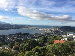 View of Wellington from the top of Mt. Victoria