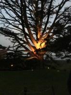 Bilbo's Party tree