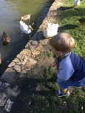 D's favourite thing to do is go and visit the ducks