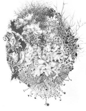 Cladonia Lichen Colony, Beavers Bend