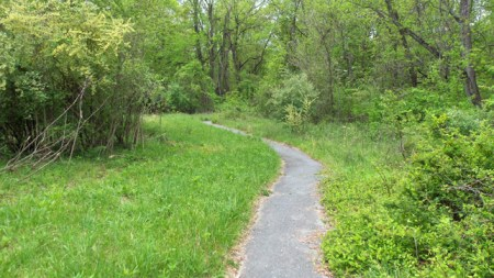 paved path in Ivy Creek natural Area