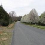 Earlysville Spring