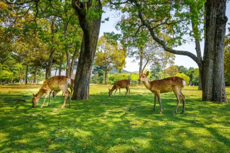 Search for info about deer in your garden from Realtor Virginia Gardner 434-981-0871