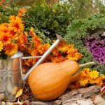 Fall plants and pumpkin photo