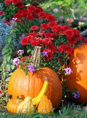 Fall blooms and pumpkins