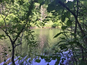Ivy Creek Natural Area pond