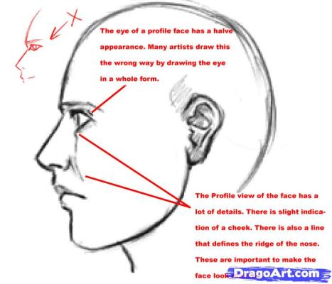 how-to-draw-realistic-people-draw-real-people-step-3_1_000000024183_5