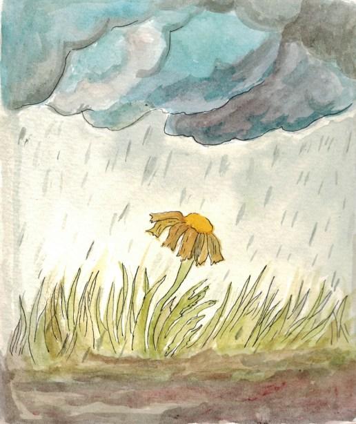 raining-cold-flower