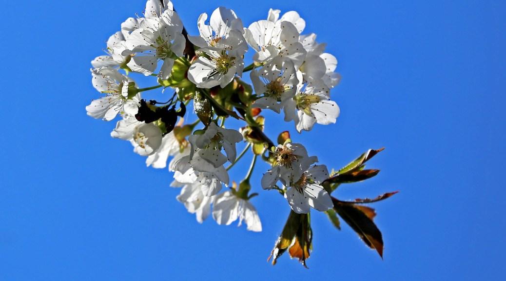 Kischblüte, Autor: Charlotte Moser