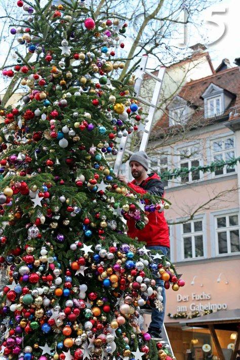 Baum der Hoffnung, autor: charlotte moser