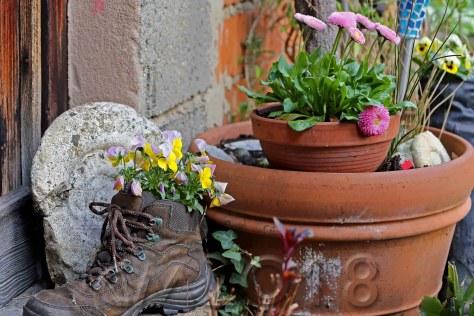 Frühlingsblüher, Autor: Charlotte Moser