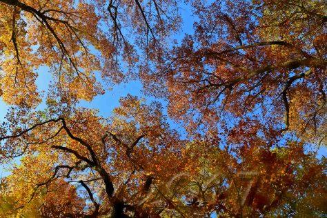 Bamberg im Herbst, Michelsberger Wald, autor: charlotte moser