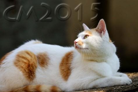 Katze_2_charlotte_moser