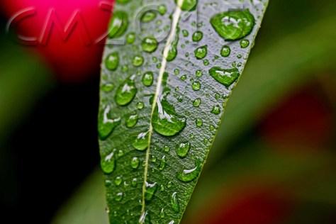 Raindrops, autor: charlotte moser