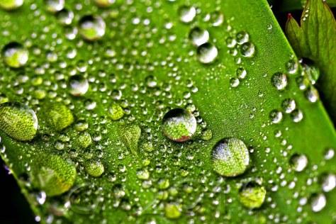 Frühlingsregen IV, Autor: Charlotte Moser