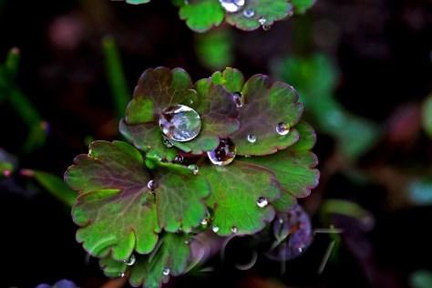 Frühlingsregen, autor. charlotte moser