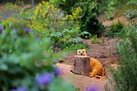 Tiergarten_nuernberg_autor_charlotte_moser