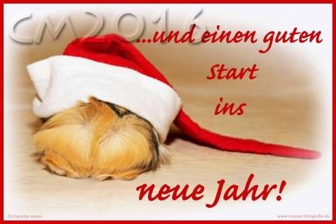 Weihnachtsmeerschweinchen, autor: charlotte moser