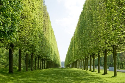 この画像には、植物、草、緑、木、植生、芝生、庭、樹木、屋外が含まれる場合があります