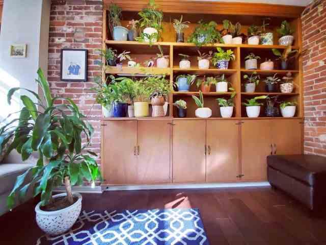 植物棚屋内庭のアイデアgardenonthegram_-20200912-ylu8es