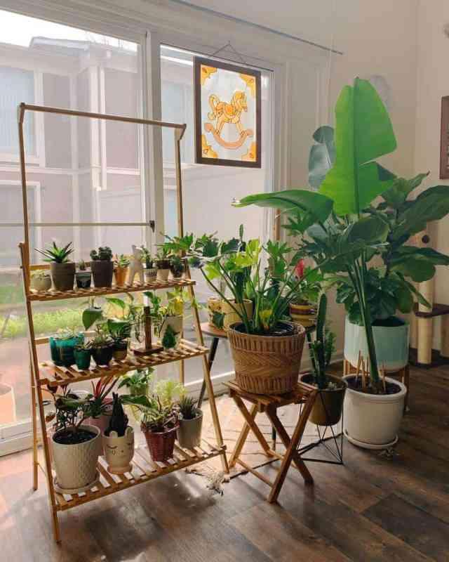 植物棚植物スタンド屋内庭のアイデアjesduh