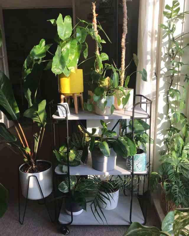 植物スタンド屋内庭のアイデアjungletowers