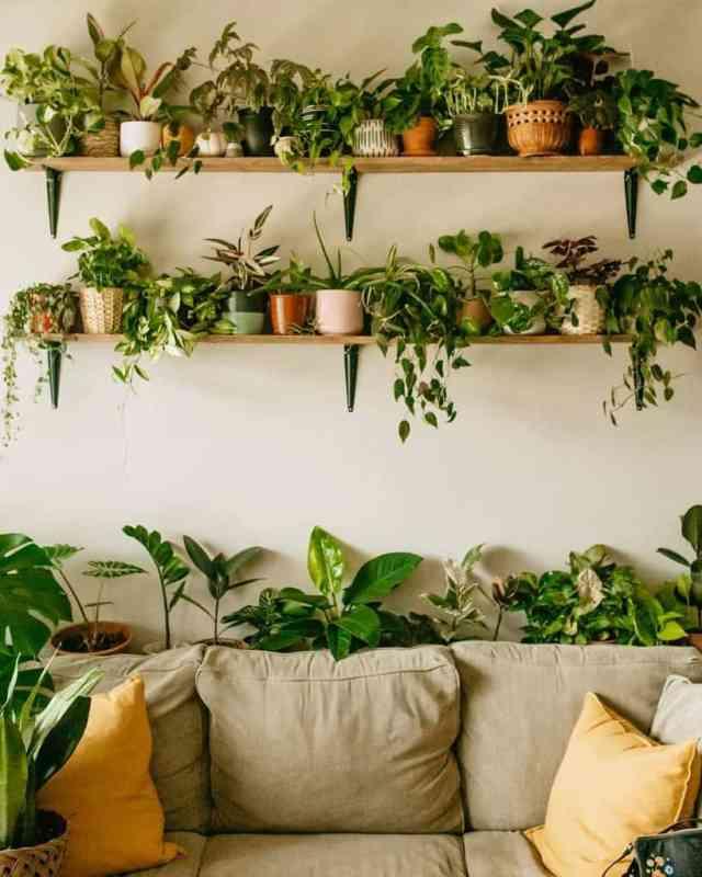 壁の棚と壁のプランター屋内庭のアイデアsydsjungle