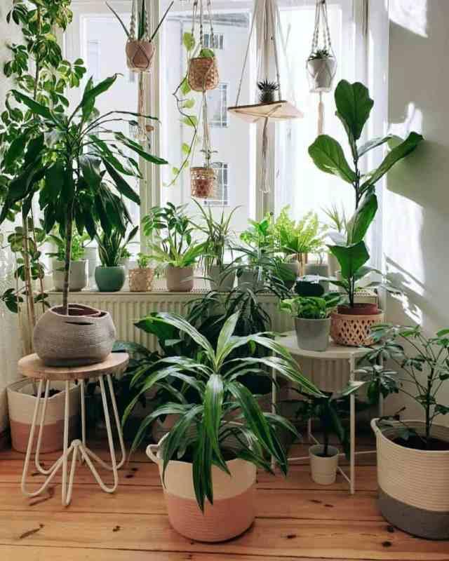 窓とサンルームの植物屋内庭のアイデアj9s_jungle