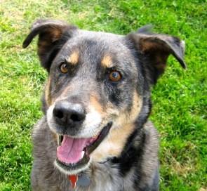 beau-the-wonder-dog