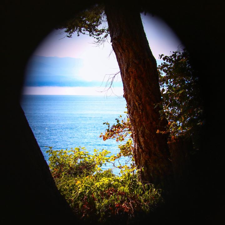 View through a fence knothole