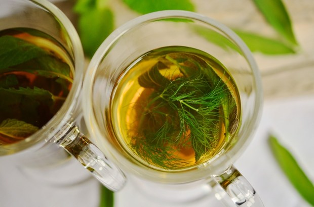 fennel-tea-best-herbal-teas-for-kids-charmposh