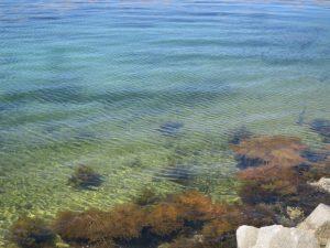 丹後春の海